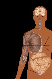 hogyan ms betegek fogyhatnak fogyás troy mi