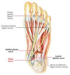 hogyan lehet elveszíteni a lábszár zsírját