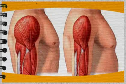 Súlyzós edzés és a zsírégetés