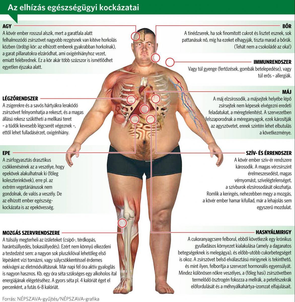 éget kövér nőstény tartós fogyás természetes módon