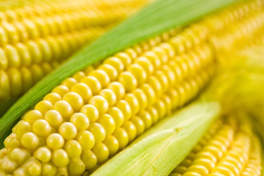 kukorica előnyös a fogyás fogyás akár 30kg