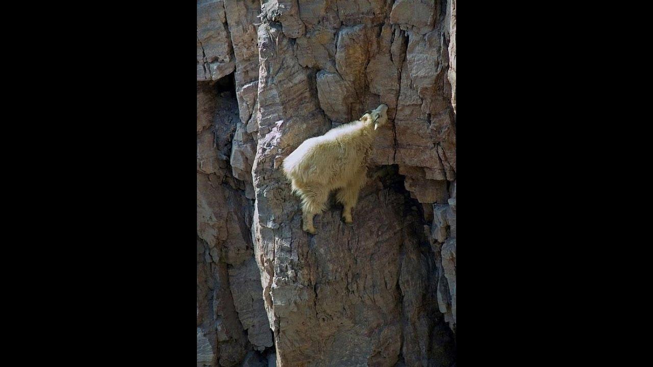 Miért veszítenek a kecskék - Monty Hall-paradoxon