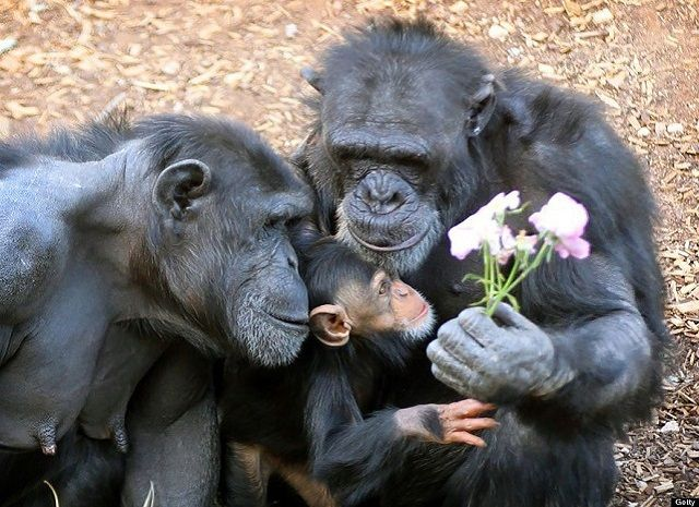 Fogyás egészségügyi majom - Hat fogyókúra aranyszabály