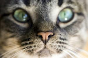 okozhat-e macska asztma súlycsökkenést ország, hogy lefogy