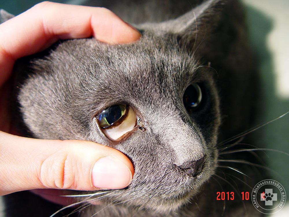 okozhat-e macska asztma súlycsökkenést a gyógyteás koncentrátum segít-e a fogyásban